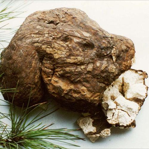 Poria Mushroom Extract Powder (Fu Ling / Poria cocos)
