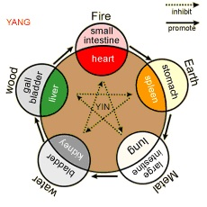 zang yin organs are tcm's material If yin is material, then yang is immaterial yin refers to aspects or manifestations of qi that are relatively material, substantial, condensing, solid, heavy, descending, cold, moist, cooling, dark, passive and quiescent.